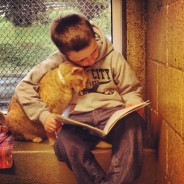 Reading to Shelter Cats