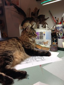 Jeannie Brett's Coon Cat Trout in the Studio